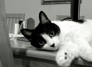 Kitty Pawprint