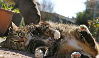 cat save life